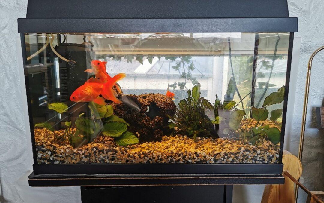 Oppfølging av akvarieforsøket
