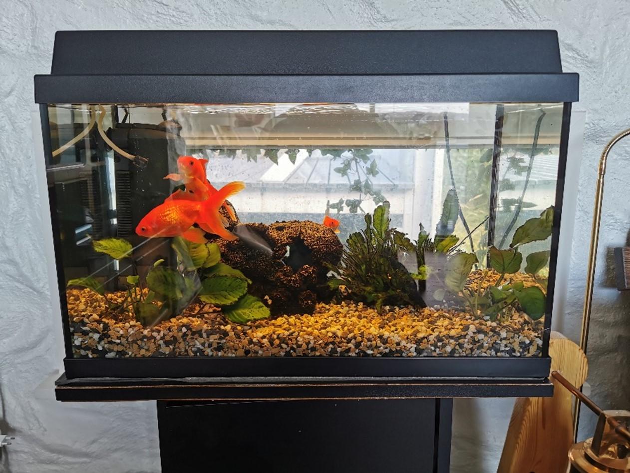 dabv-akvariet